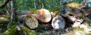 shamanic drums for meditation and connecting with nature