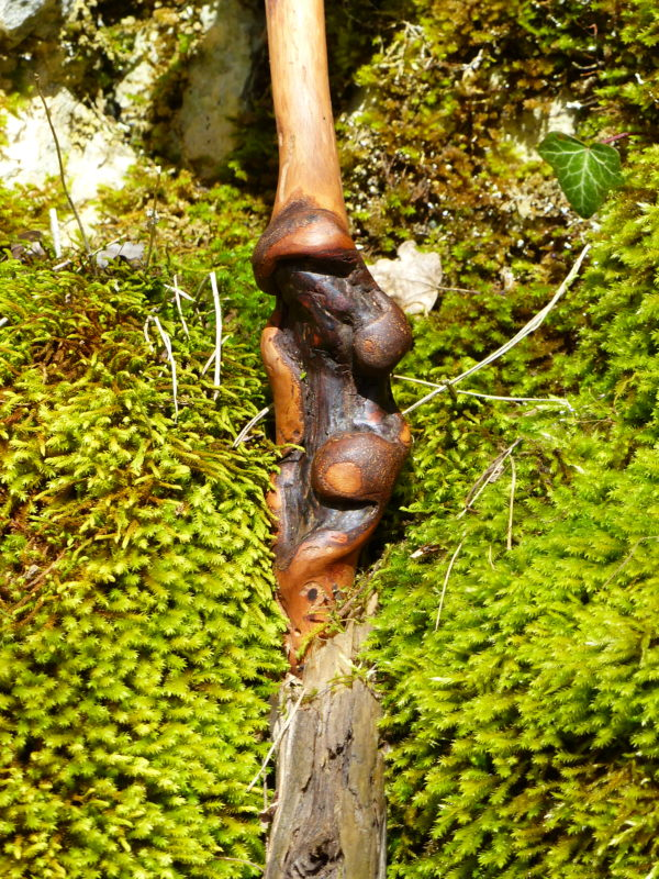 apple wood handle