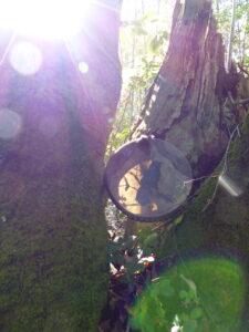 tunable shamanic drum