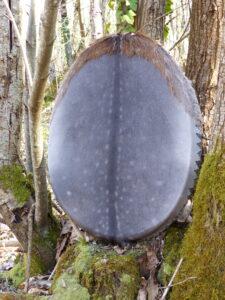 shamanic drum for meditation and journeying